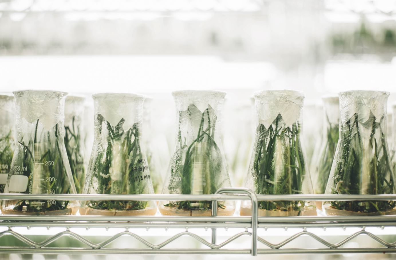ciencia y desperdicio de comida